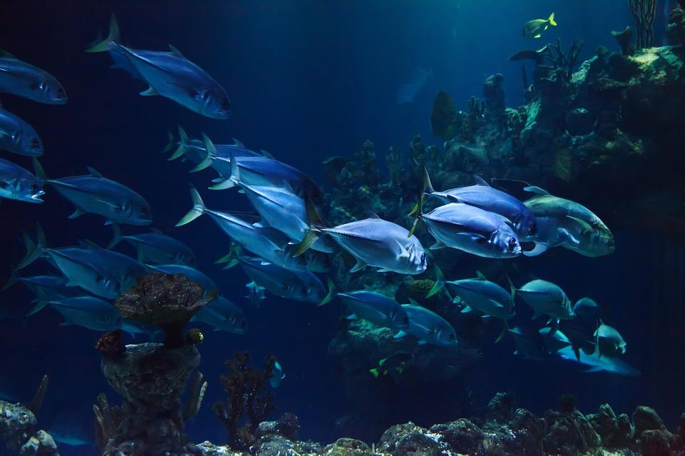 Agite as águas para atrair os peixes: foto de um cardume de peixes
